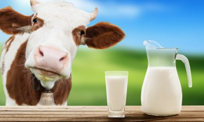 Je li mlijeko štetno?