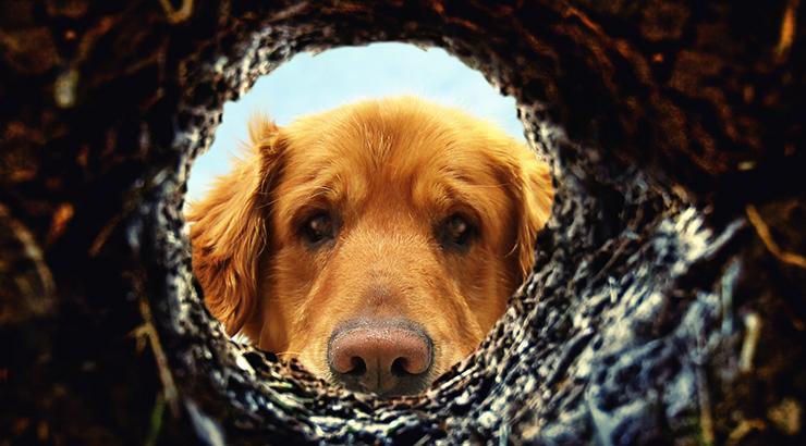 Uzeti psa na socijalizaciju? Za slijepe osobe?