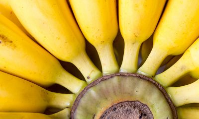 Kako banane zriju?