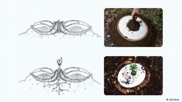 eko-pogreb-sadnica
