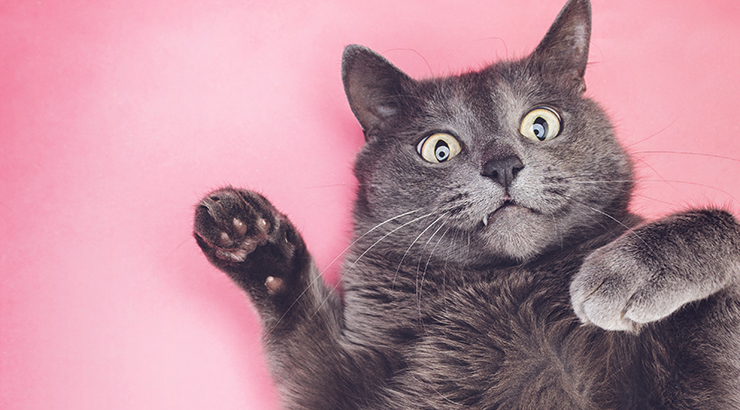 gradske mačke, hrabiti na javnim površinama