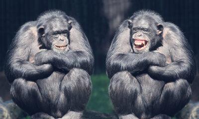 Najbolji vicevi. Smijeh je zdrav.