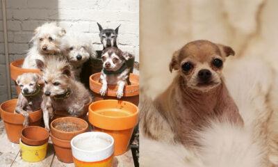 Udomljavanje starih pasa