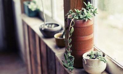 Što s biljkama nakon cvatnje?