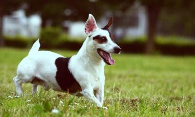 Najljepši pas na svijetu