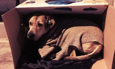 Kako spasiti psa od zime