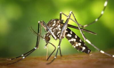 najbolje sredstvo protiv komaraca