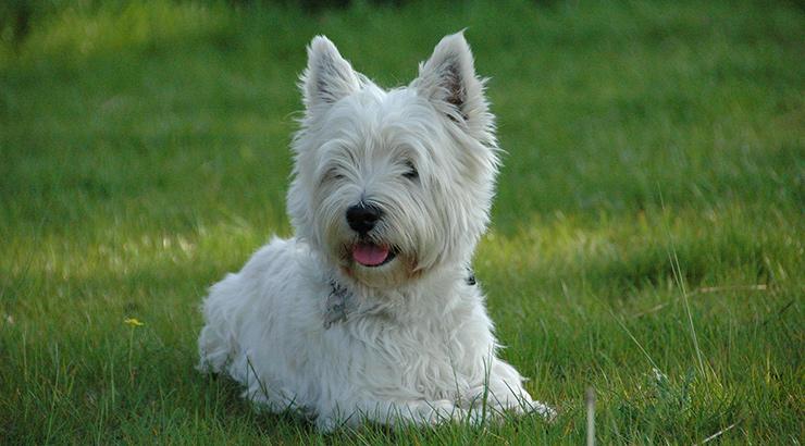 Koji su najbolji psi za starije ljude?