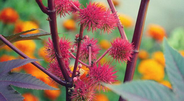 Otrovne ukrasne biljke