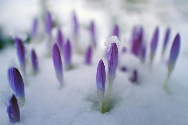 Proljeće u Zagrebu