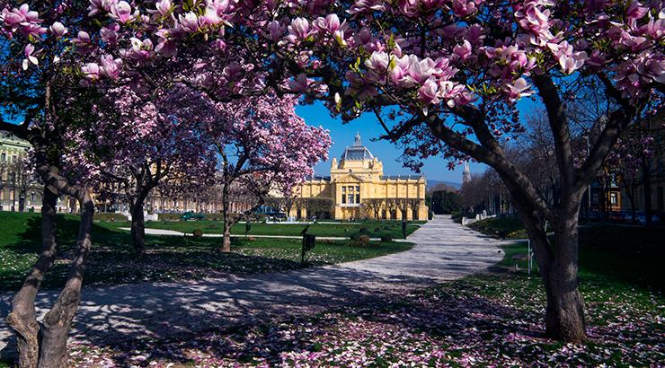 Gdje kupiti magnoliju?