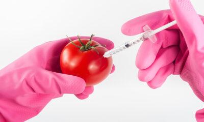 Je li GMO štetan?