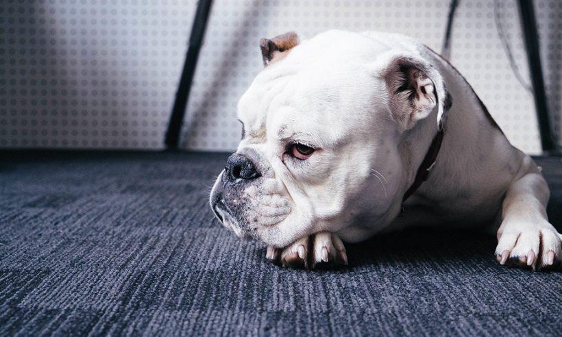 Jesu li psi opasni za djecu?
